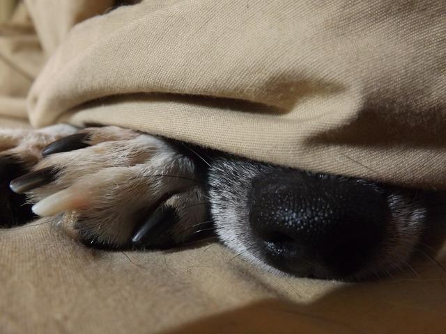 Pets dog nose, animals.