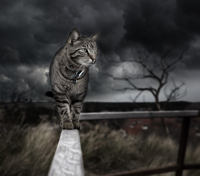Photo manipulation cat photoshop, animals.