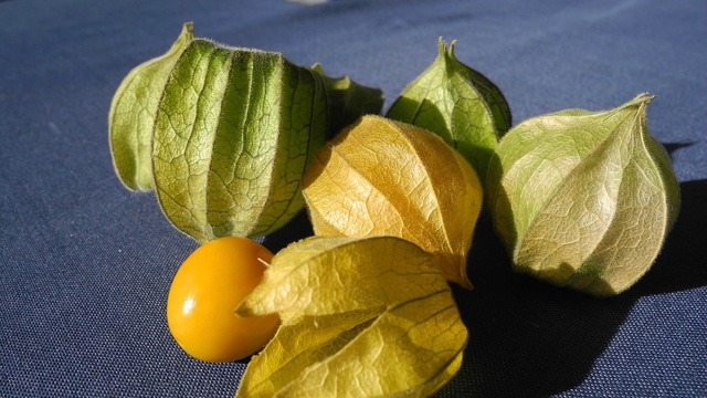 Physalis cape gooseberry fruit, food drink.