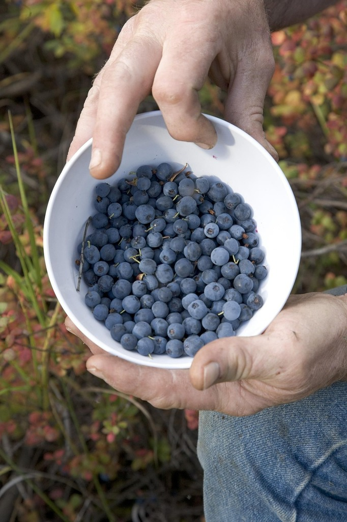 Picture fruit blueberries, food drink.