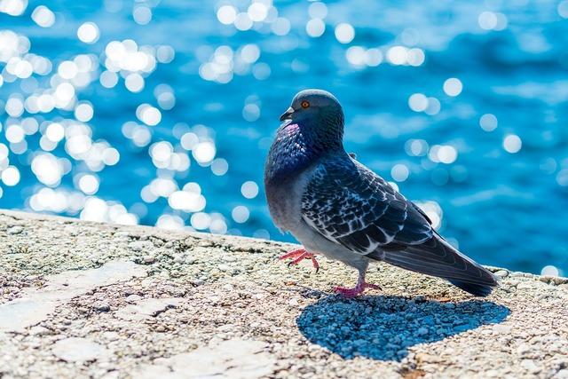 Pigeon dove animal, animals.