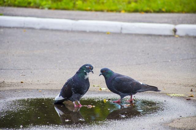 Pigeons love birds, emotions.