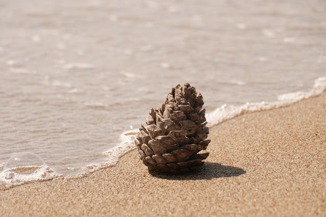 Pine cones beach sand, travel vacation.