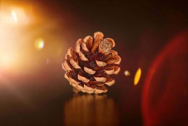 Pine cones natural product light, nature landscapes.