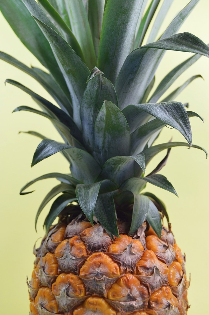 Pineapple fresh raw, nature landscapes.