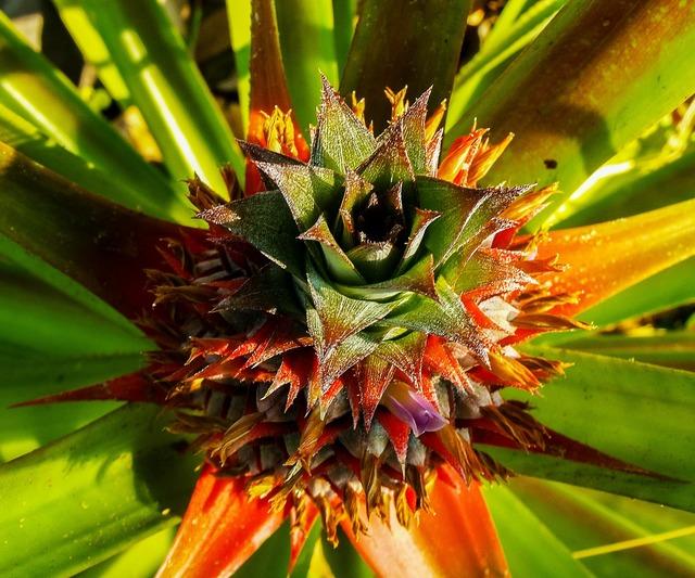 Pineapple fruit plant, food drink.