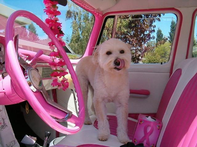 Pink car dog, transportation traffic.