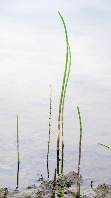 Plant aquatic plant engine, nature landscapes.