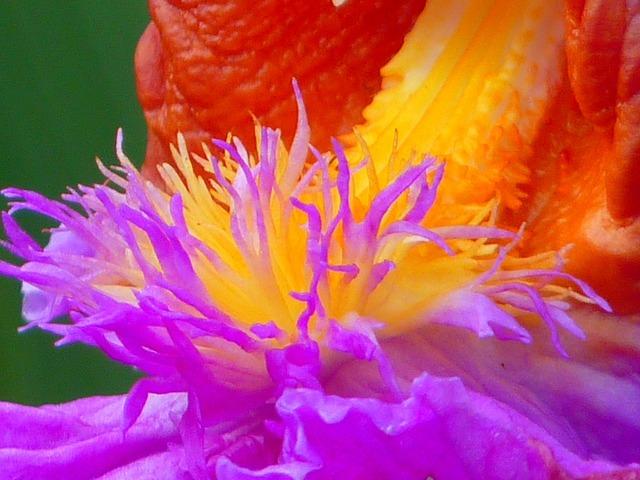 Plant blossom bloom, nature landscapes.