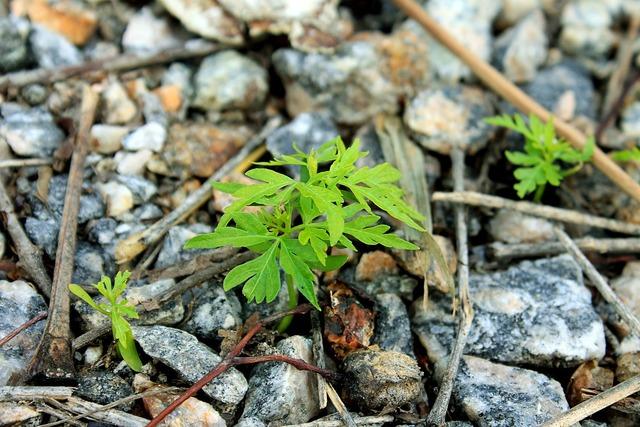 Plant branch leaf, nature landscapes.