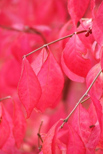 Plant bush pink, nature landscapes.