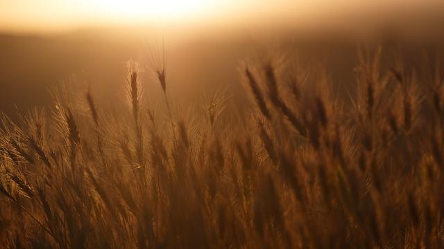 Plant crop grain, nature landscapes.