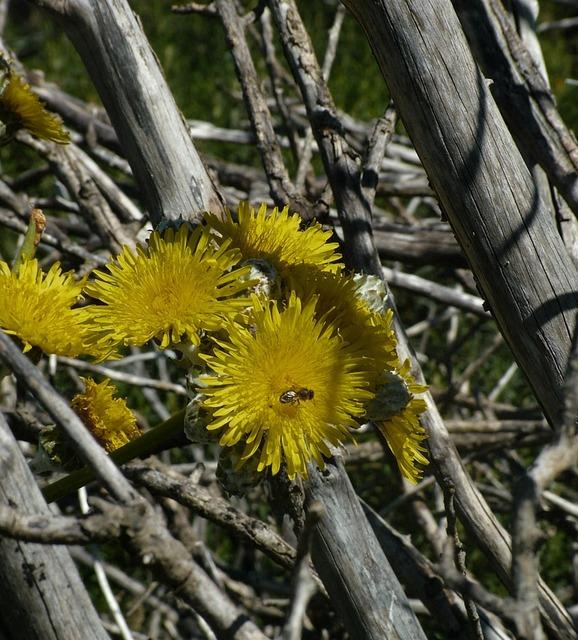 Plant fauna tenerife, nature landscapes.