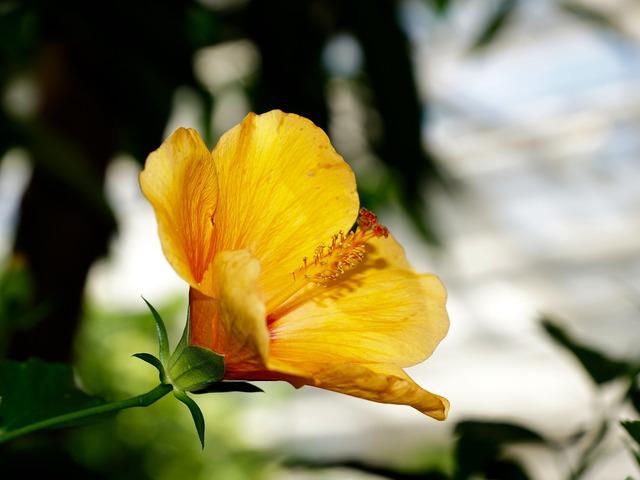 Plant flowers blossom, nature landscapes.