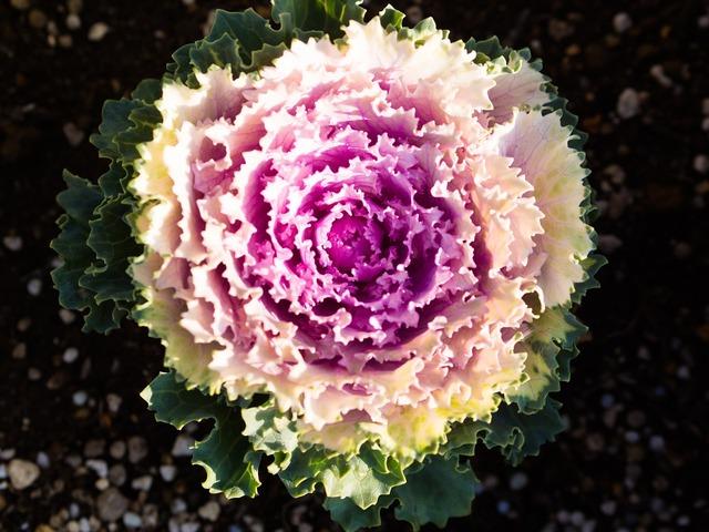 Plant flowers purple, nature landscapes.
