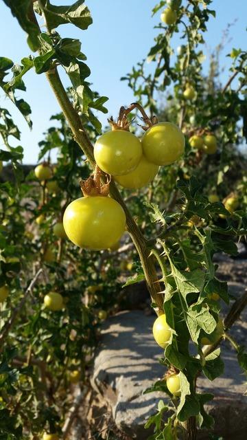 Plant fruit agriculture, nature landscapes.