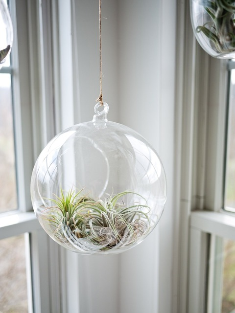 Plant glass glasshouse, nature landscapes.