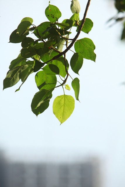 Plant green leaves, nature landscapes.