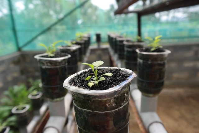 Plant hydroponic growth, nature landscapes.