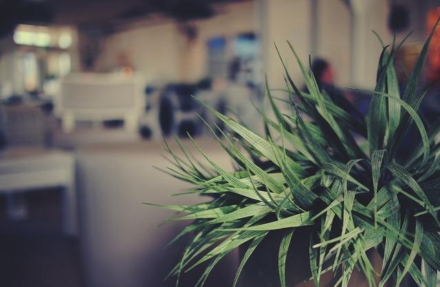 Plant indoors cafe, nature landscapes.