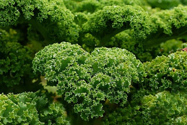 Plant kale autumn and winter vegetables, nature landscapes.