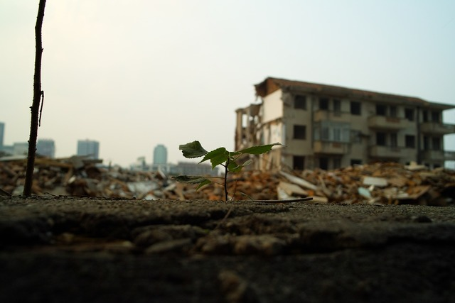 Plant leaf building, nature landscapes.