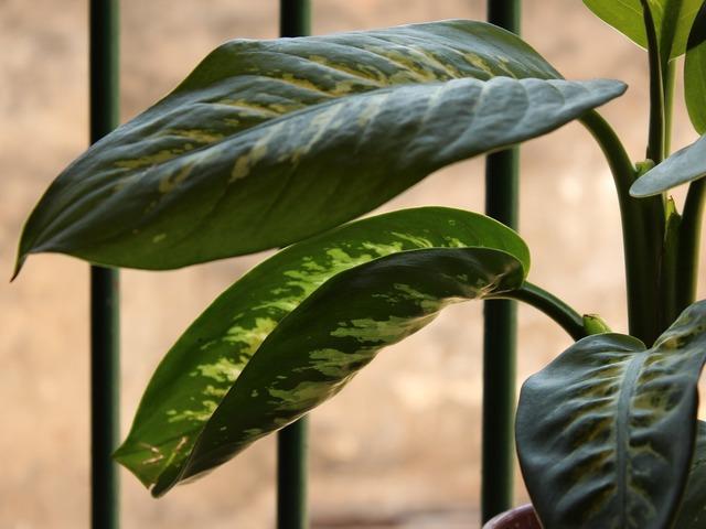 Plant leaves aningapara, nature landscapes.