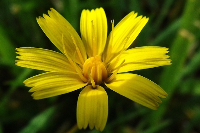 Plant macro yellow wildflower, nature landscapes.