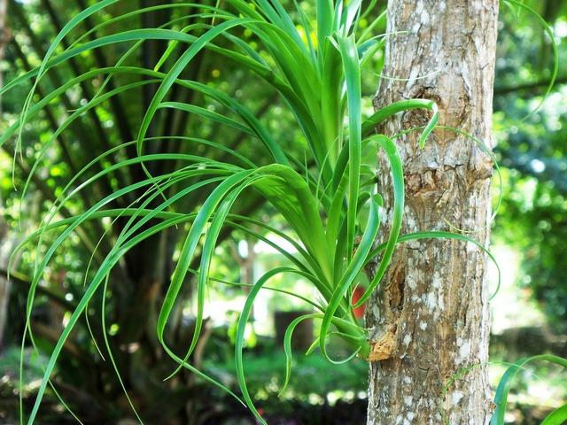 Plant mexico exotic, nature landscapes.