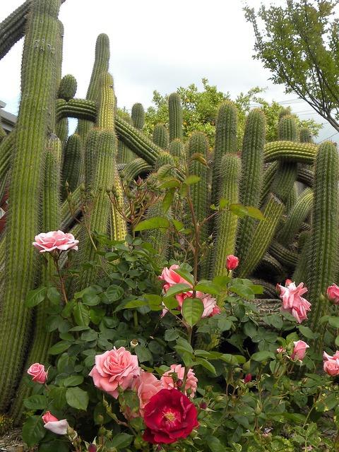Plant mission san, nature landscapes.