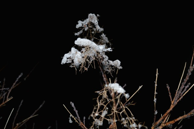 Plant night ice, nature landscapes.