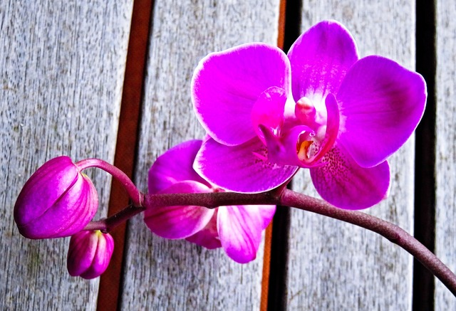 Plant orchid phalaenopsis, nature landscapes.