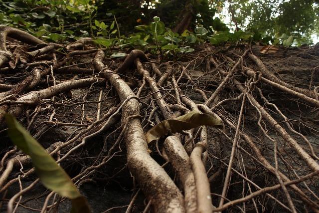 Plant roots leaves, nature landscapes.