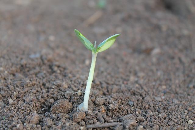 Plant sprout dicotyledon, nature landscapes.