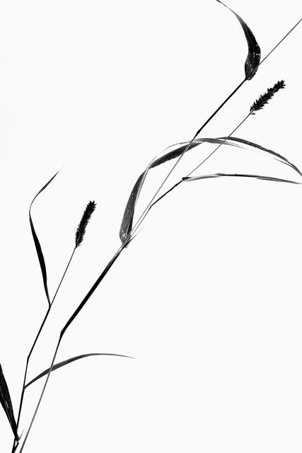 Plant still life grass, nature landscapes.