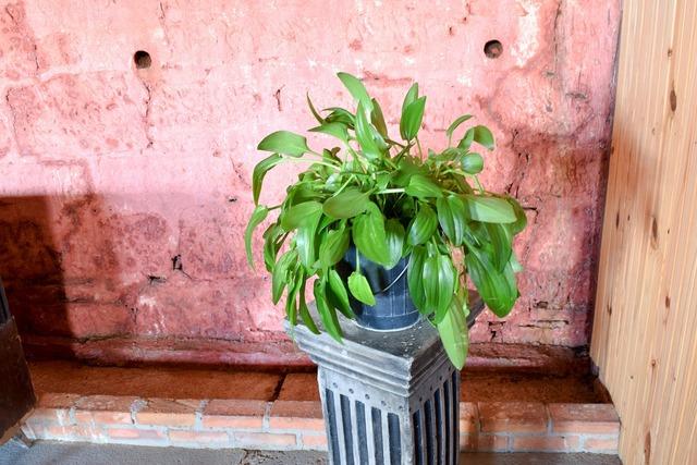Plant textures foliage, nature landscapes.