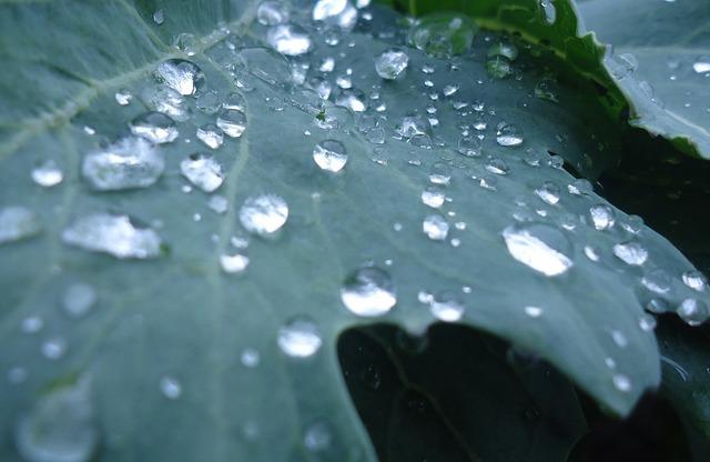 Plant vegetables drop of water, nature landscapes.