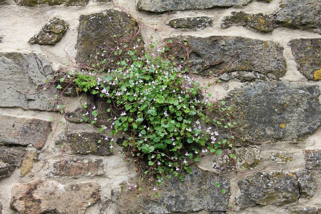 Plant wall blossom, nature landscapes.
