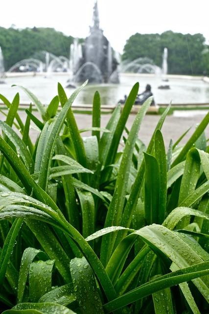 Plant wet fresh, nature landscapes.