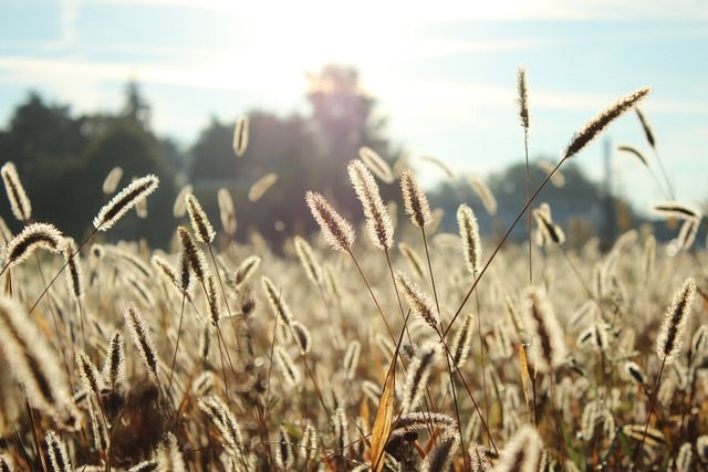 Plants field sunshine.