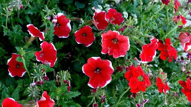 Plants flowers summer.