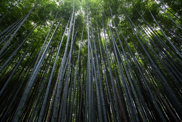 Plants trees bamboo, nature landscapes.