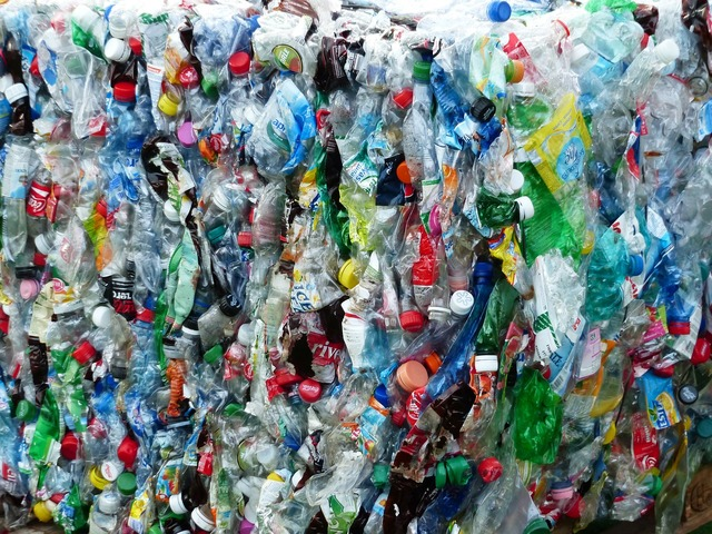 Plastic bottles bottles recycling, animals.