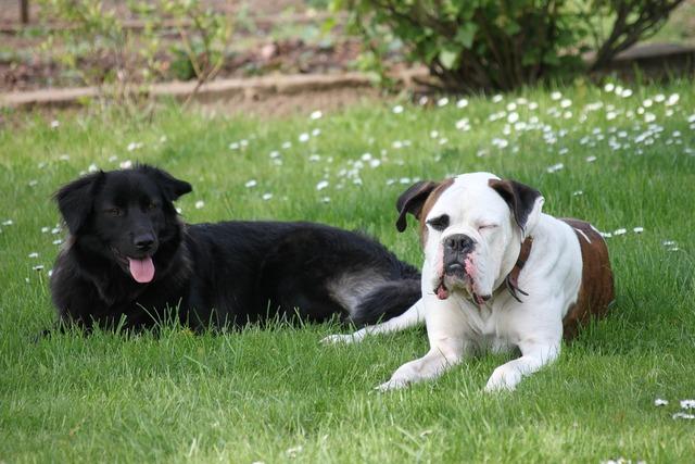 Play dogs rush, animals.