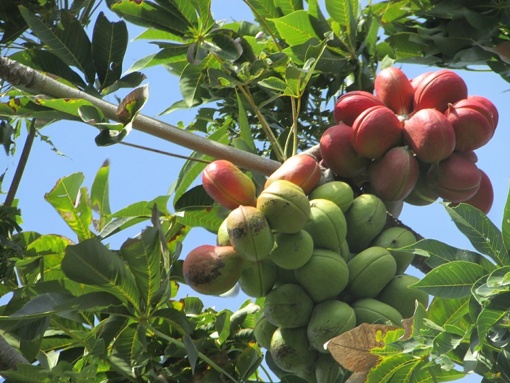 Pleasant poster fruit, food drink.