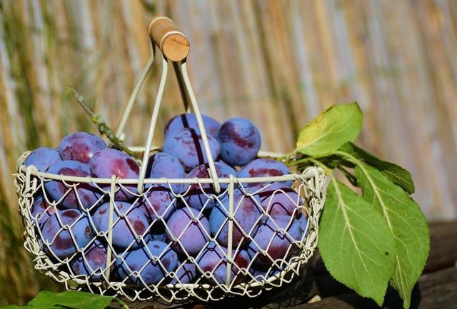 Plums fruit basket fruit, food drink.