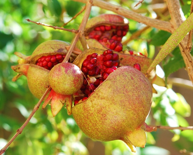 Pomegranates fruit passion, food drink.