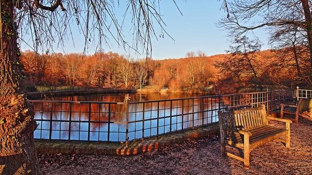 Pond autumn emerge, nature landscapes.