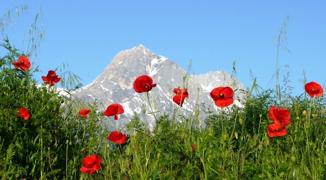 Poppies mountain italy, nature landscapes.