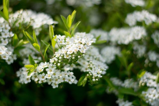 Porridge white bush, nature landscapes.